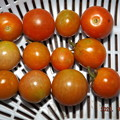 2021/09/27(月)・昼に採れた野菜