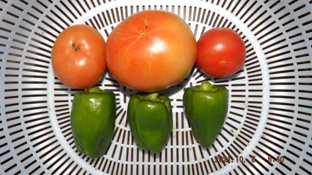 2021/10/05(火)・朝に採れた野菜達
