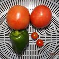 2021/10/08(金)・昼に採れた野菜達