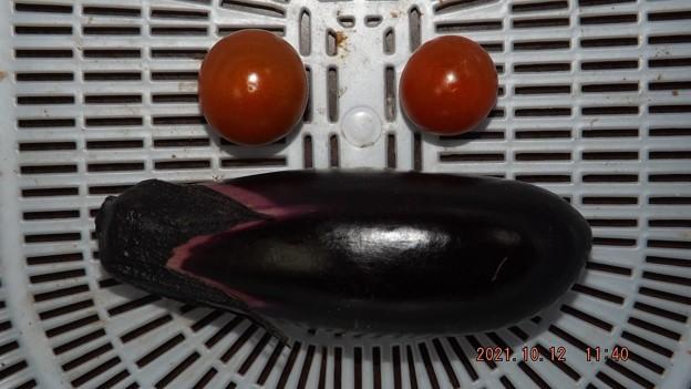 2021/10/12(火)・昼前に採れた野菜達