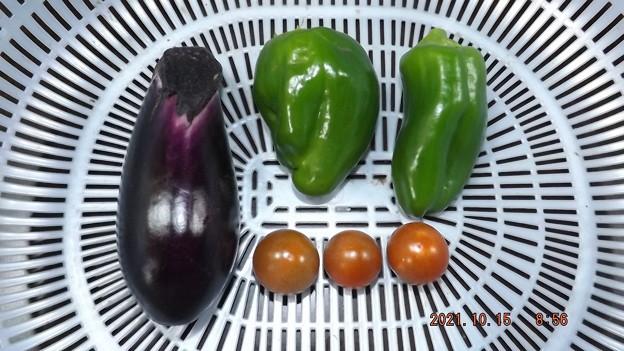 2021/10/15(金)・朝に採れた野菜達