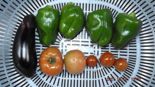 2021/10/18(月)・午後に採れた野菜達