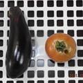 2021/10/20(水)・朝に採れた野菜達