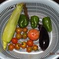 2021/10/27(水)・朝に採れた野菜達