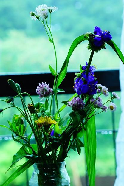 Photos: 野の花を愛でる