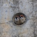 Photos: 雀のお宿