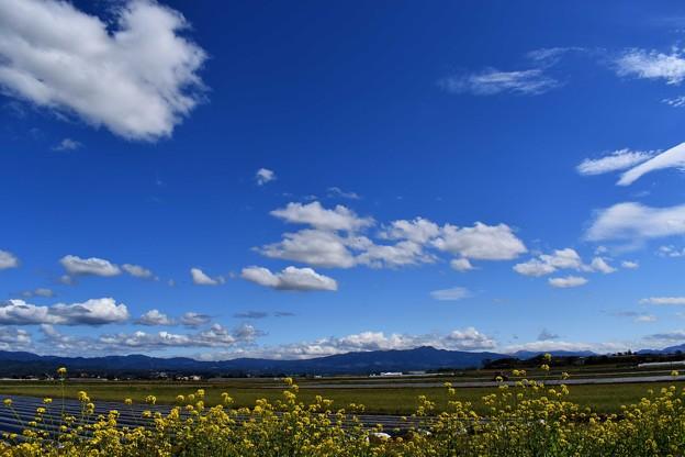 Photos: 春晴れ