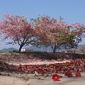Photos: 散る花 咲く花