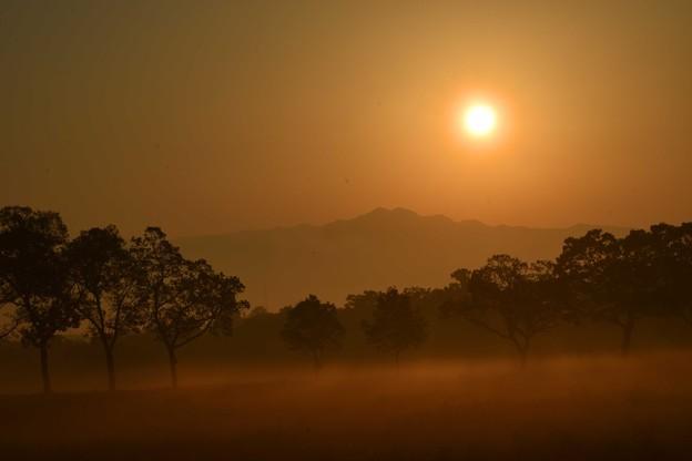 Photos: 朝の景