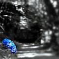 Photos: 紫陽花の小径 2