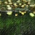 Photos: Rainy Day Feeling