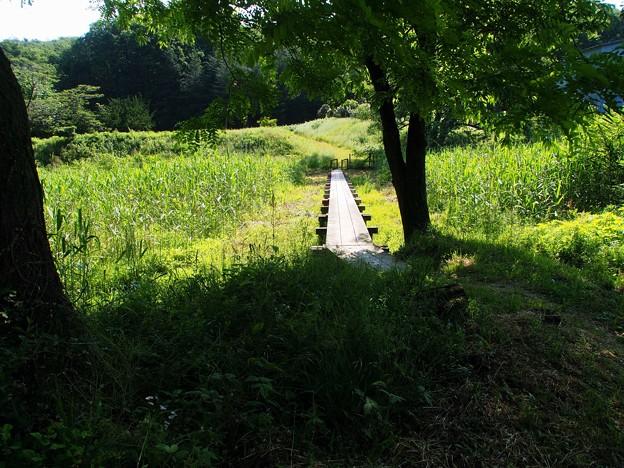 夏草の誘い