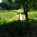 Photos: 夏草の誘い