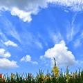 Photos: おーい 空よ雲よ花よ