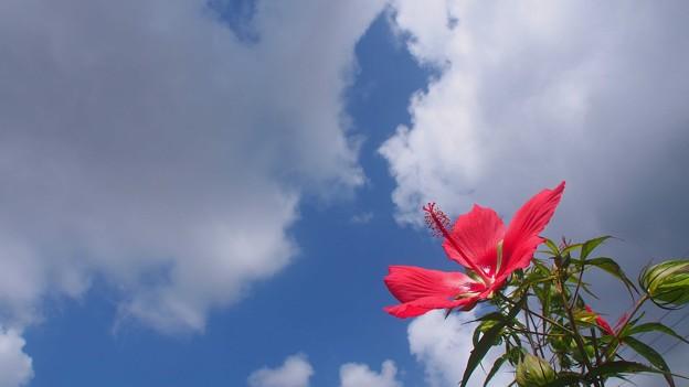 夏が似合う花