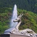 Photos: 昇り竜