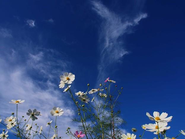 おーい 空よ雲よ