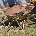 猫ネコに乗る