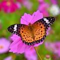 満開(花も蝶も)