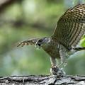 Photos: Wild bird