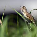 Photos: 音量調整要す鳥w