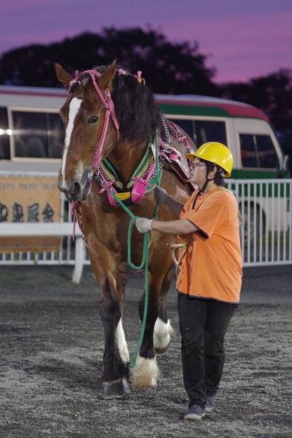 セイコークイン(2018年6月30日鹿追町競馬会杯)