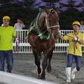 キンメダル(2018年6月30日鹿追町競馬会杯)