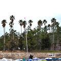 艇置き場とヤシの木