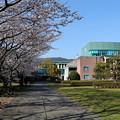 高知工科大学と桜