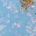 Photos: 豊島区立目白庭園08