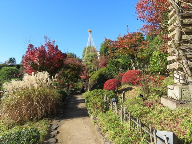 豊島区立目白庭園02