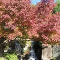 Photos: 豊島区立目白庭園03