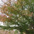 小石川植物園003