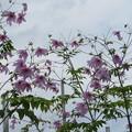 Photos: 小石川植物園001