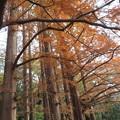 Photos: 小石川植物園037