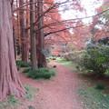 小石川植物園035