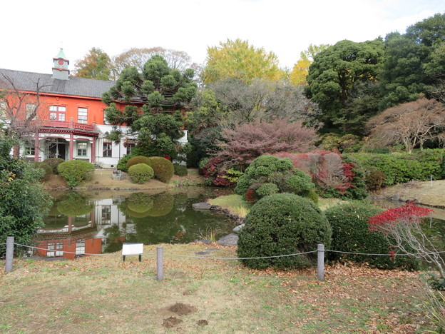小石川植物園021