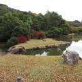 Photos: 小石川植物園020