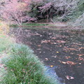 Photos: 小石川植物園027