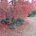 Photos: 小石川植物園029