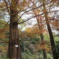 Photos: 小石川植物園033