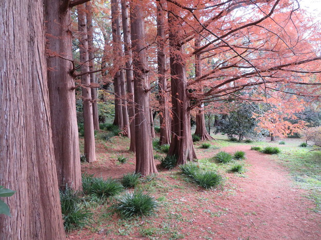 小石川植物園036