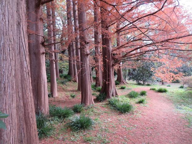 Photos: 小石川植物園036