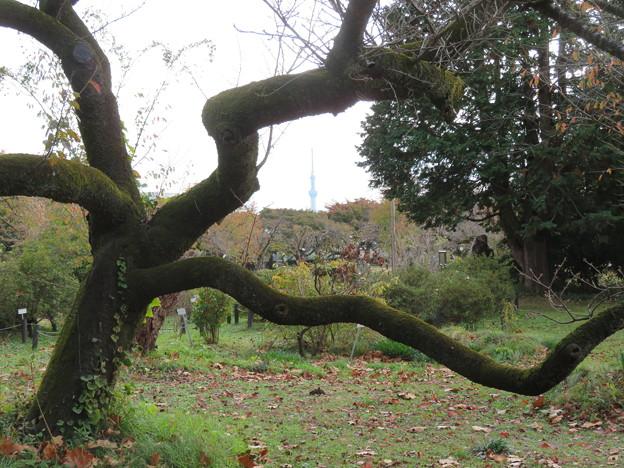 小石川植物園007