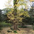 小石川植物園012