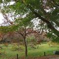 小石川植物園002