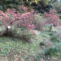 Photos: 小石川植物園034