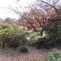 小石川植物園018