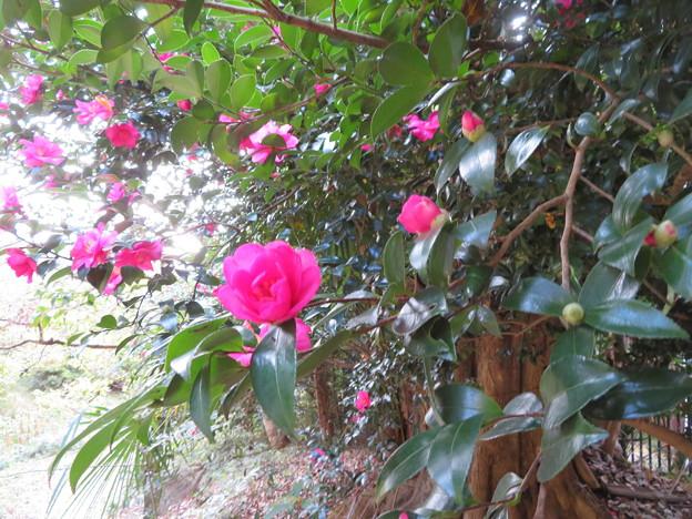 Photos: 小石川植物園017