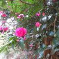 小石川植物園017